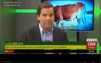 Entrevista a Lucía Gaete, dueña de Naturamiel en CNN Chile